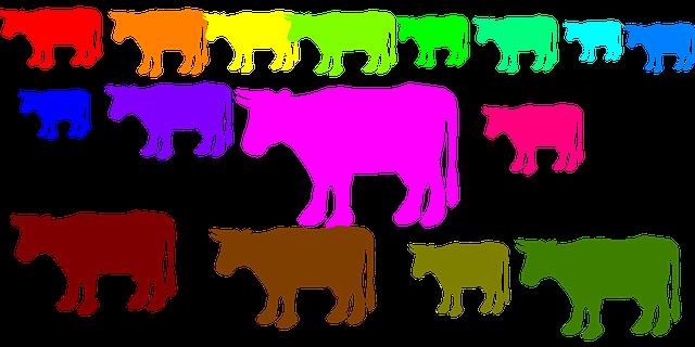 barevné stádo krav