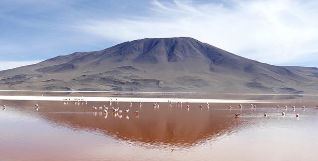 ptáci na vodě.jpg