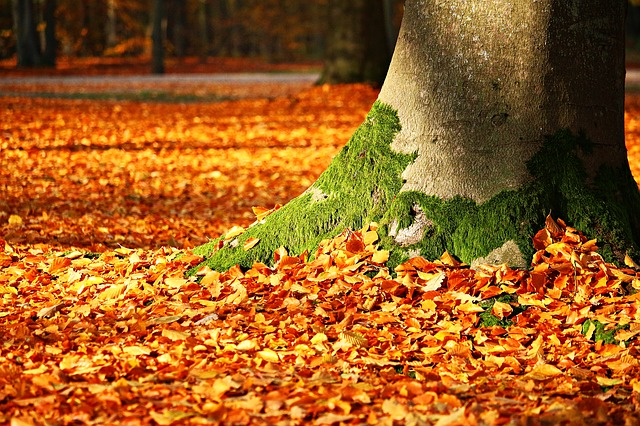 listí pod stromem