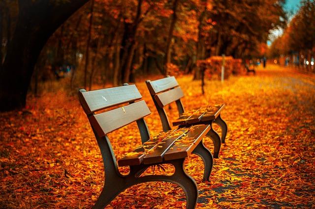 listí v parku