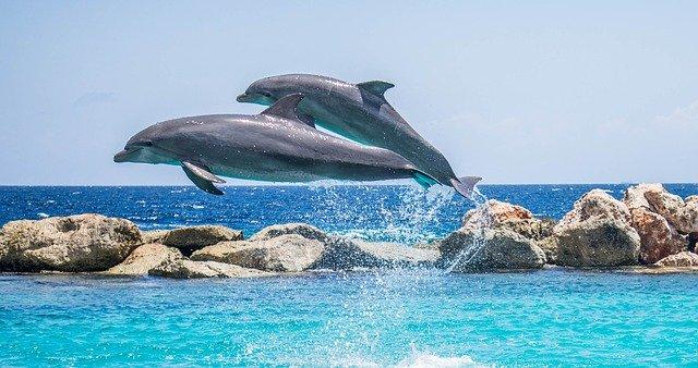 delfíni ve vodě